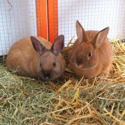 Kaninchen Conrad & Corinna