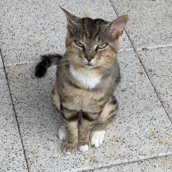 Katze Memati/Memo