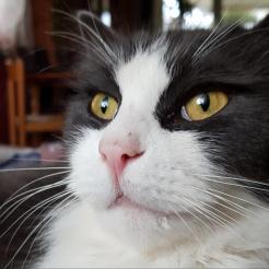 Profilbild von Murphy