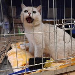 Katze Fundkatze Ahrweiler