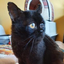 Katze Riley