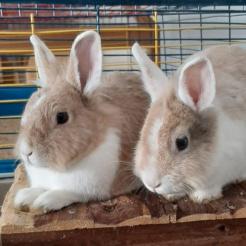 Kaninchen Selina und Samuel