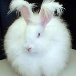 Profilbild von Vermisste Kaninchen und Kanarienvögel in Ahrbrüc