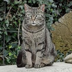 Profilbild von Jacky