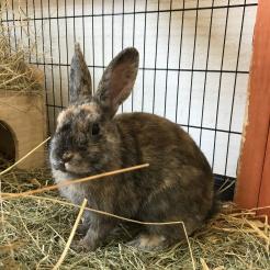 Kaninchen Richard