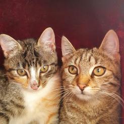 Katze Alessia + Cara