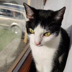 Profilbild von Shyla