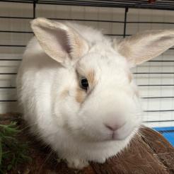 Kaninchen Thilo
