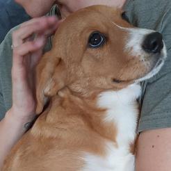 Hund Oskar