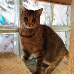 Katze Luana