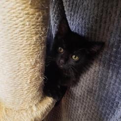 Katze Choco