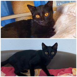 Katze Manni + Maya