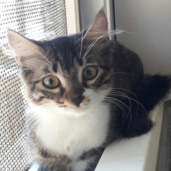 Katze Cassiopeia