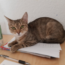 Profilbild von Fely
