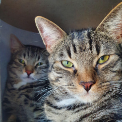 Katze Simba & Pumba